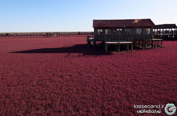 سفر به ساحل زیبا و خیره کننده سرخ چین