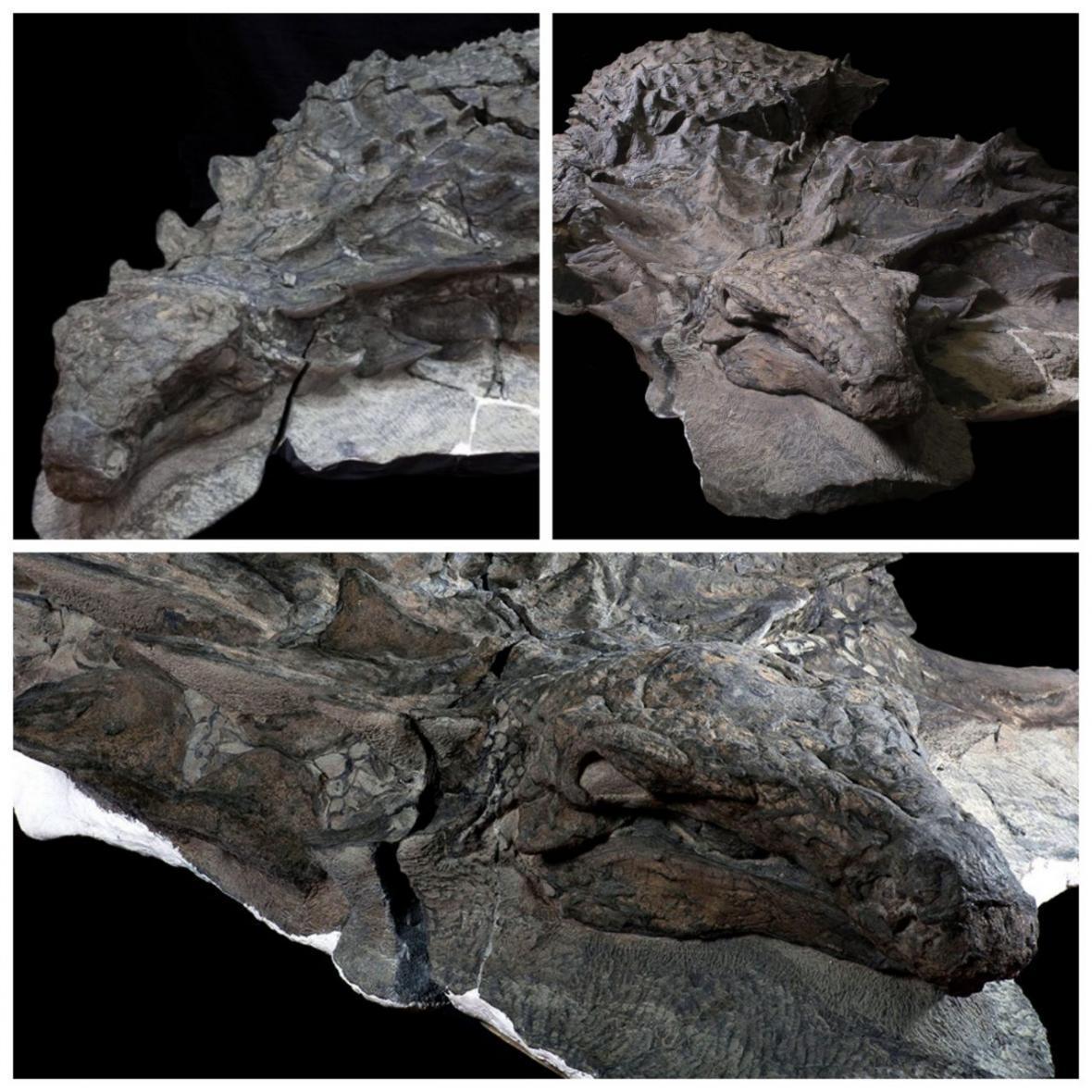 فسیل تقریباً سالمی از یک دایناسور در کانادا کشف شد