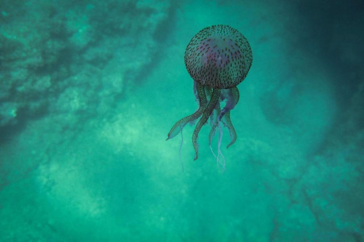 ادامه گرمایش اعماق اقیانوس ها تا سال 2050