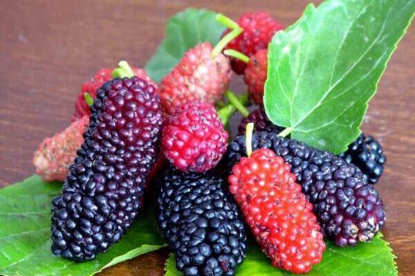 لزوم ایجاد صنایع تبدیلی محصول توت در مهریز