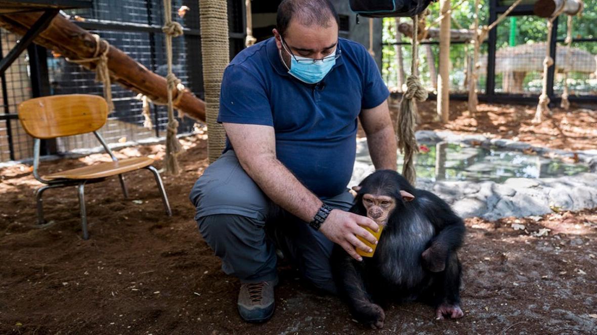 پویش کاربران برای نجات بچه شامپانزه باغ وحش ارم