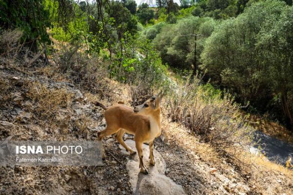 تمدید ممنوعیت شکار در 8 منطقه همدان