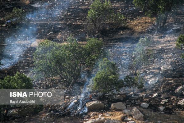 آتش سوزی جنگل های شبلیز دنا مهار شد